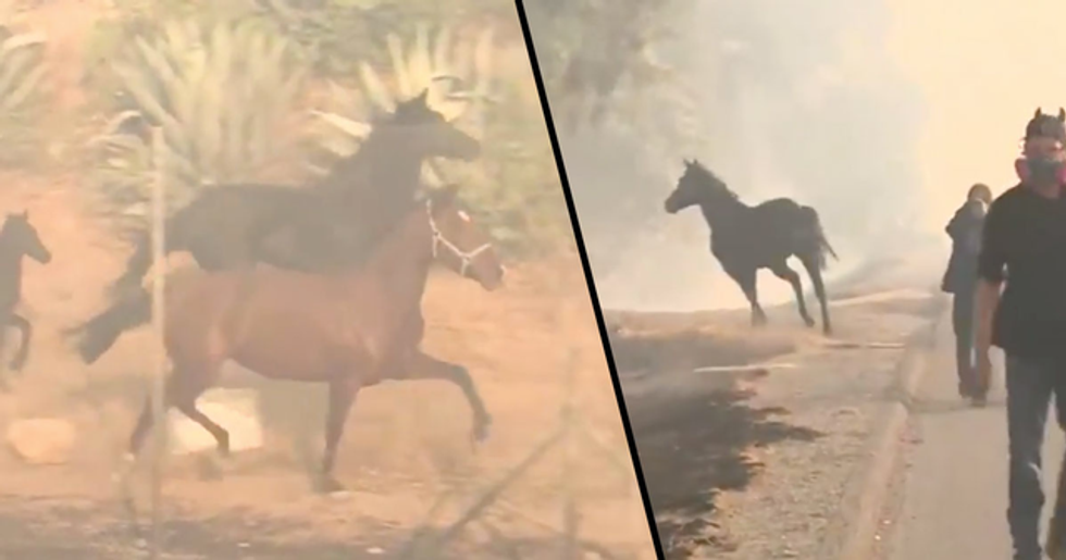 Horse Runs Back into Danger to Save Other Horses from California Fire