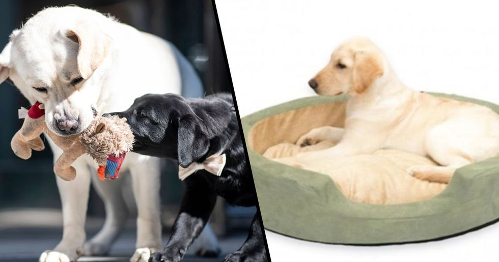 This Heated Bed Will Keep Your Dog Warm in the Winter