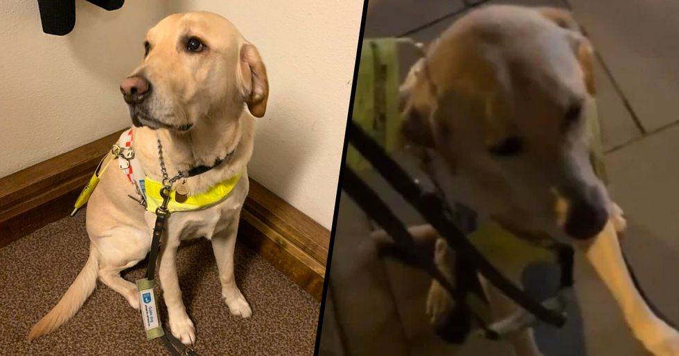 Guide Dog 'Rooted in Fear' Due to Fireworks Leaving Disabled Owner in Danger