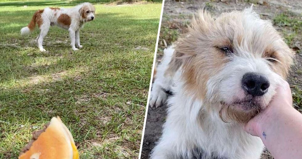 Woman Visits Stray Dog Every Day Until He Finally Lets Her Pet Him