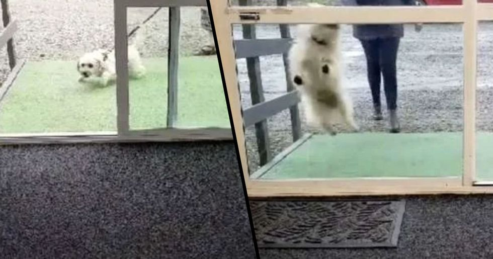 Hidden Camera Captures Dogs Arriving at Doggy Daycare