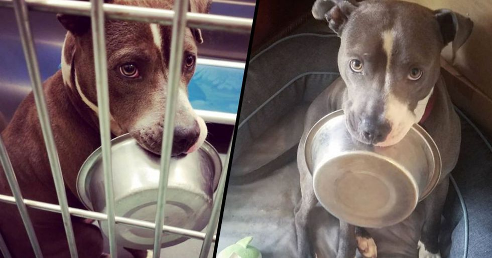 Shelter Dog Loves His Food Bowl so Much That He Refuses to Be Adopted Without It