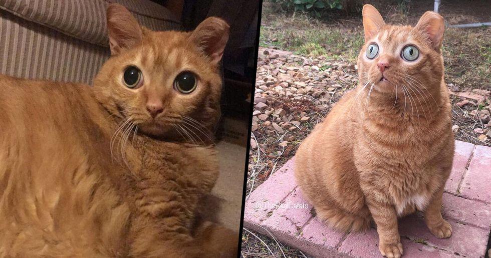 Potato the Cat's Huge Eyes Have Made Him an Internet Sensation