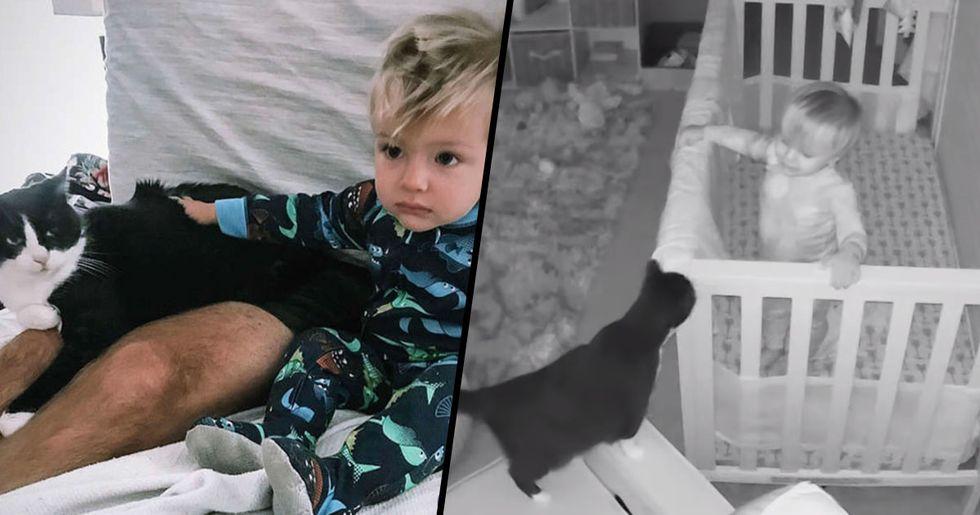 Hidden Camera Captures Cat and Baby Having the Cutest Conversation