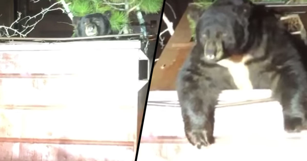 Bear Needs A Helping Hand After Getting Himself Stuck In A Dumpster