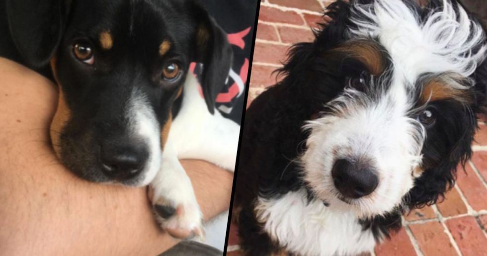 These Border Collie Mixes Are Unbelievably Adorable