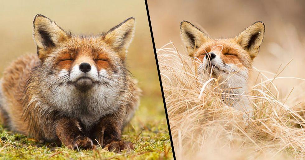Photographer Documents Wild Foxes Enjoying Themselves