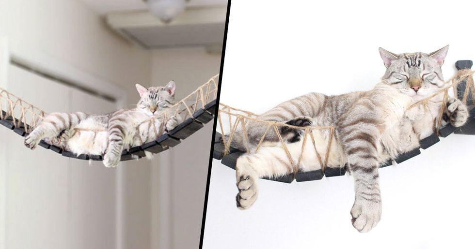 You Can Now Buy an Indiana Jones-Themed Cat Bridge and It's Adorable