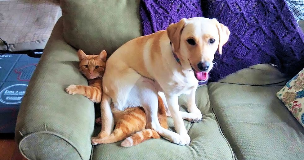 Adorable Animals Acting Like Jerks