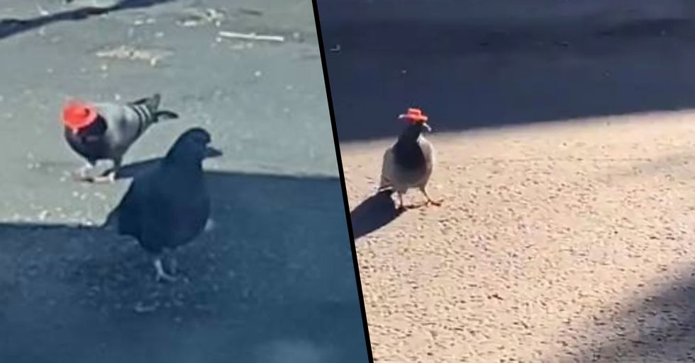 Someone Is Putting Tiny Cowboy Hats on Pigeons in Las Vegas