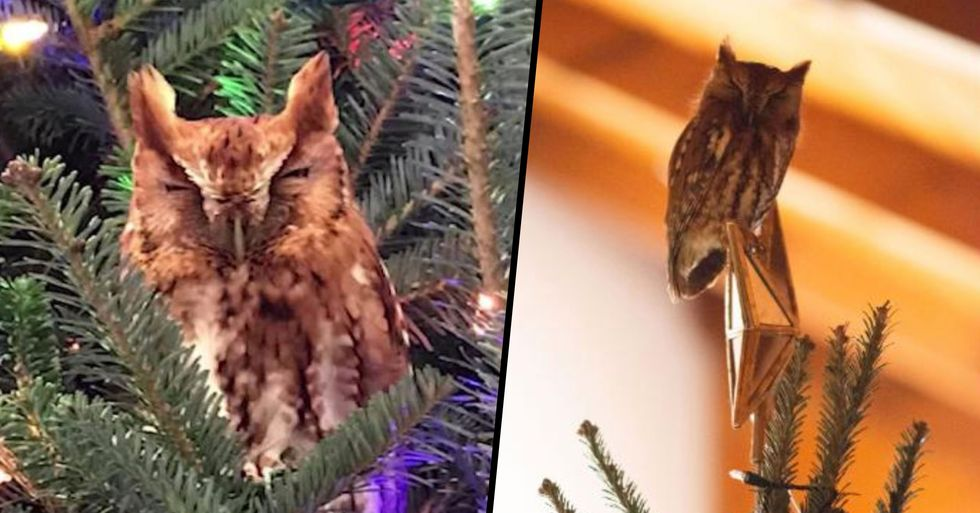 Georgia Family Finds Owl Hidden in Their Christmas Tree, It Refuses to Leave