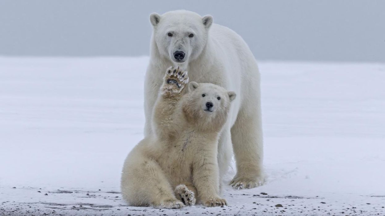 Biden Is Urged to Ban ANWR Drilling After Court Approves Auction of Fossil Fuel Leases