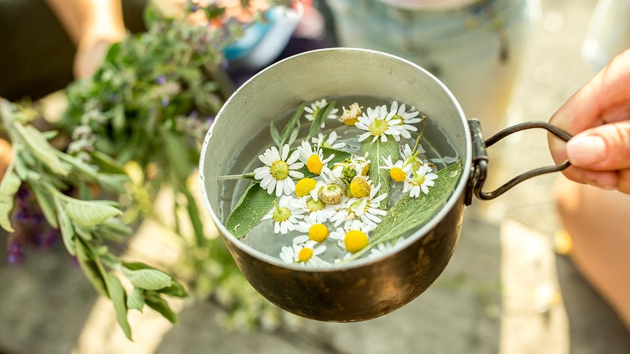 What's So Great About Chamomile Tea? Everything.