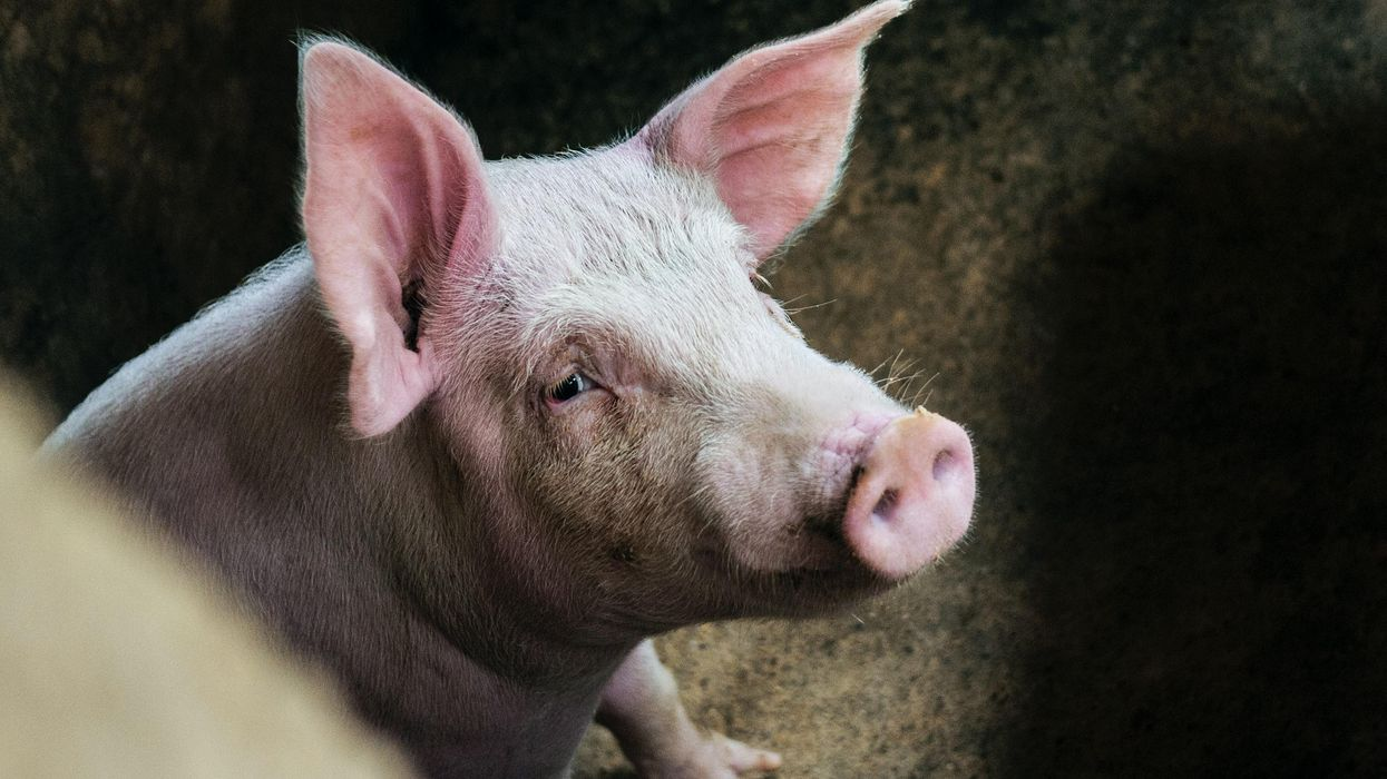 Startup looks to begin pig-to-human organ transplants by 2022