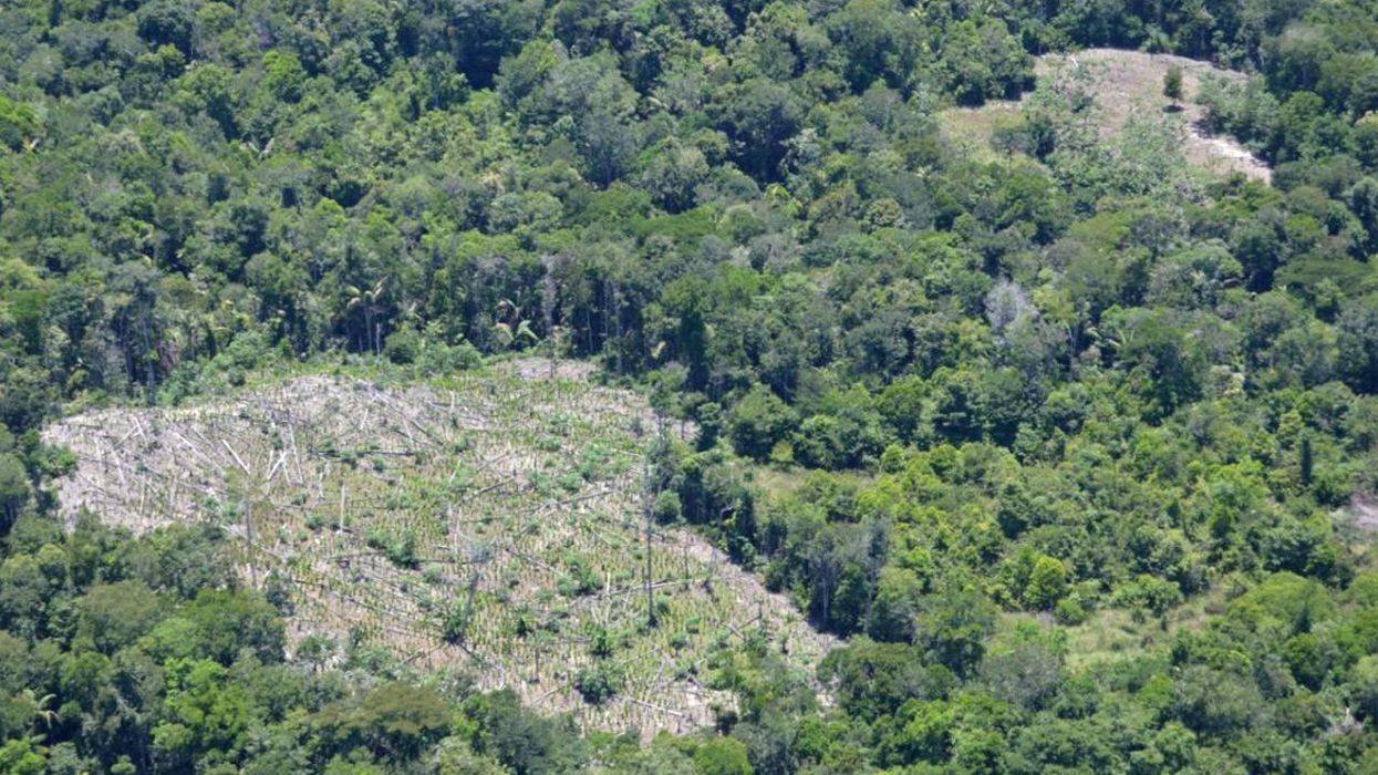 Cocaine Production Is Destroying Colombia National Park Old-Growth Rainforest