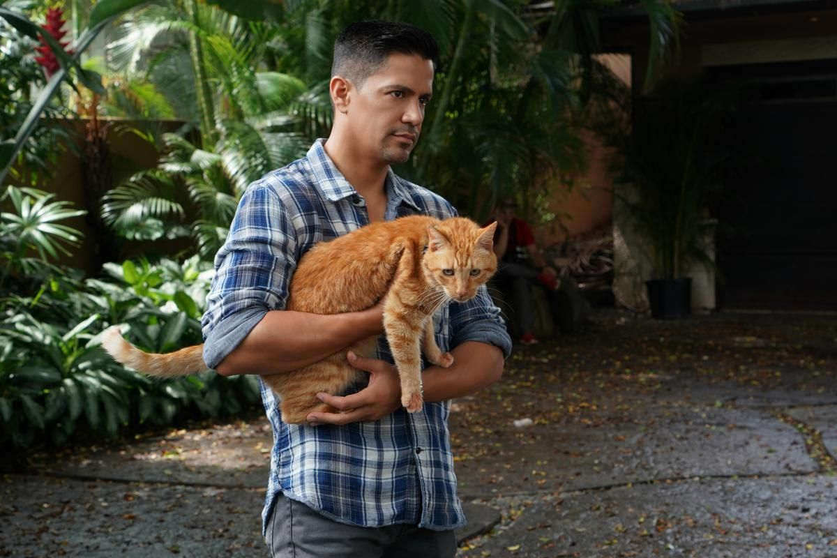 Thomas Magnum holding an orange tabby cat