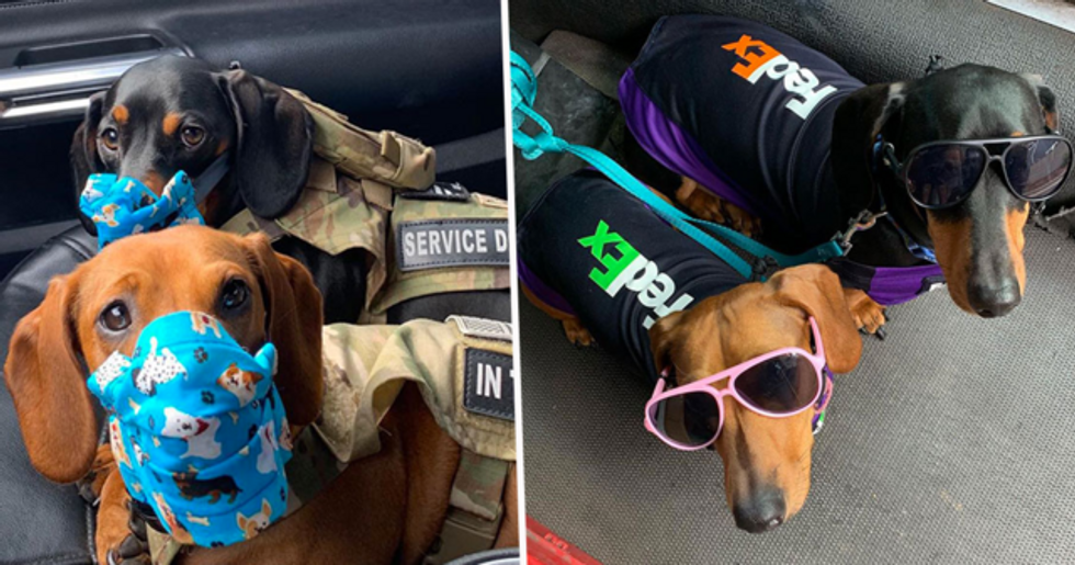 FedEx Driver Takes His Puppies on Deliveries With Him After Their Daycare Closes