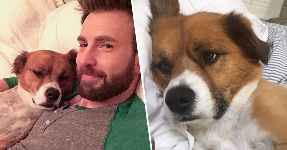 Chris Evans Joined Instagram for the Sole Reason of Sharing Photos of His Dog