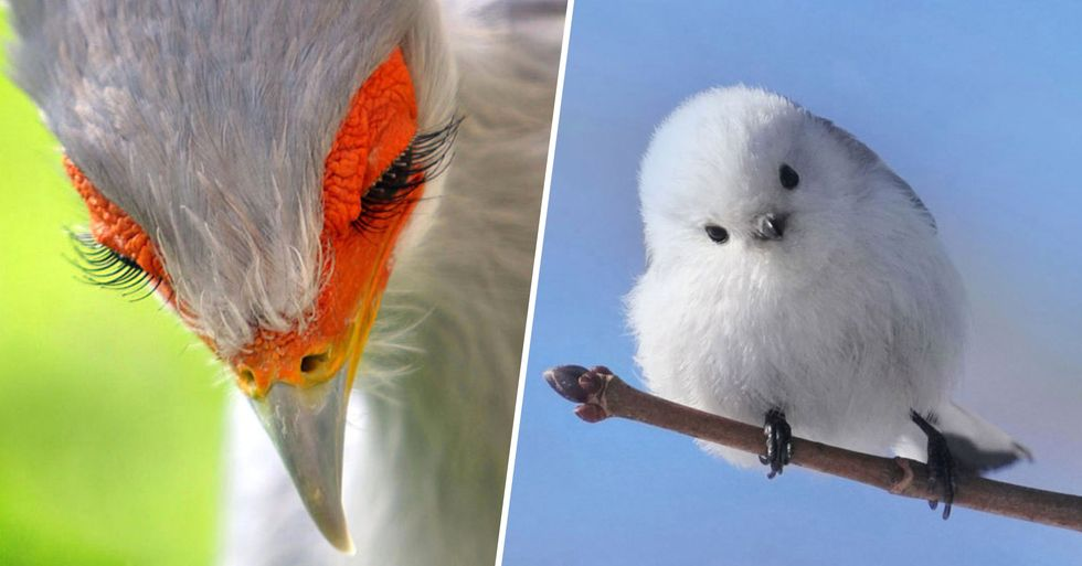 There Are so Many Extraordinarily Beautiful Birds You Won't Have Heard of
