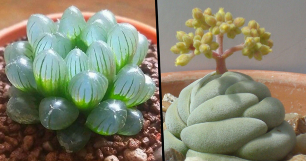 All These Magical Succulents Look Like Something out of This World
