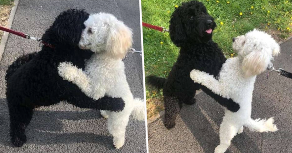 Dog Meets Sibling From Same Litter in Park and They Immediately Start Hugging