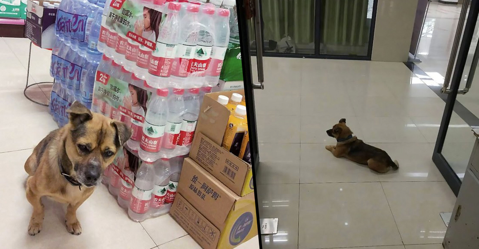 Loyal Dog Waits at Wuhan Hospital for Months After Owner Dies of Coronavirus