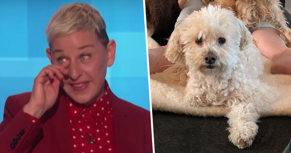 Ellen Degeneres Mourns the Death of Her Dog