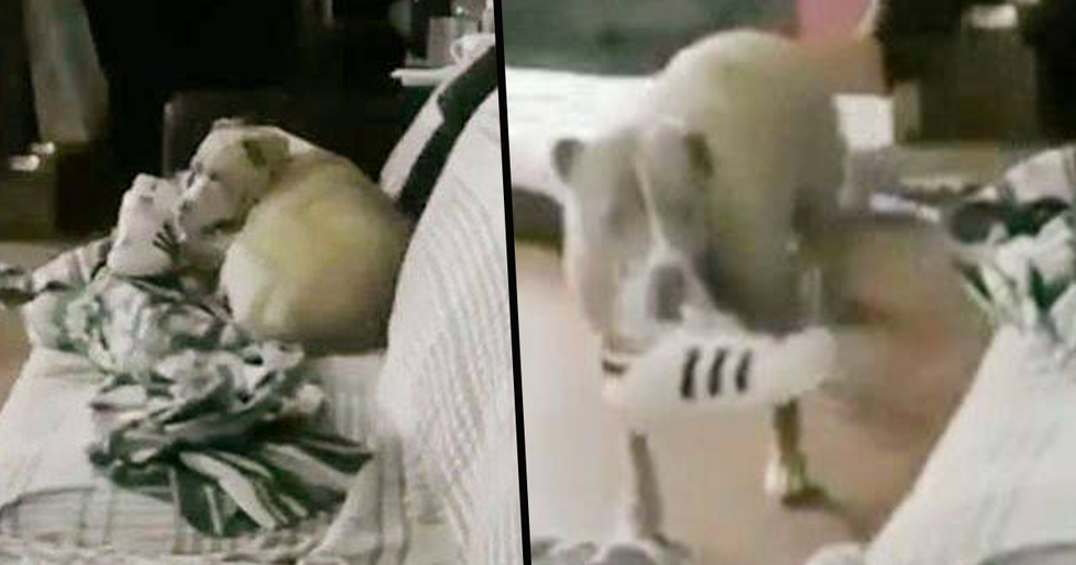 Owners Promise to Never Leave Pets Alone Again After Dog's Act of Loneliness is Caught on Camera