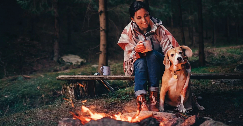 The Essential Gear for Camping With Your Dogs (2020)