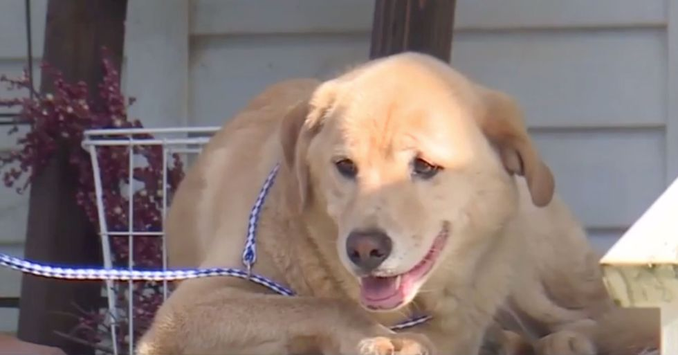 Dog Goes on 57-Mile Walk to Old Home Family Moved Away From 2 Years Ago