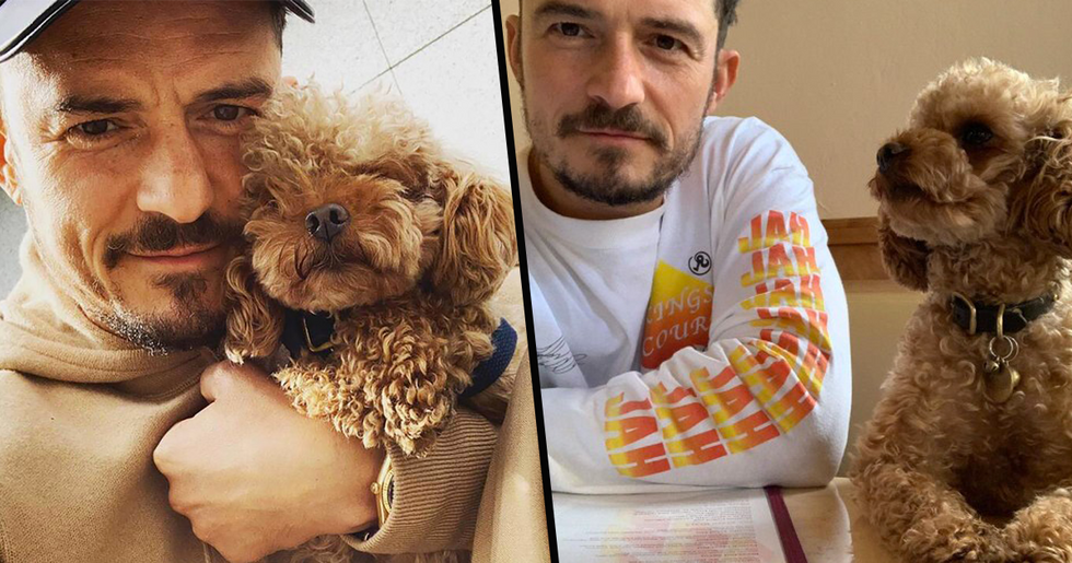 Orlando Bloom and Katy Perry Confirm Missing Dog Mighty has Died