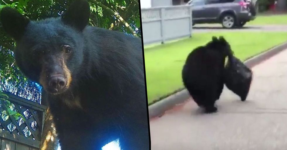 Black Bear Killed After Residents Leave Out Food to Take Videos of It