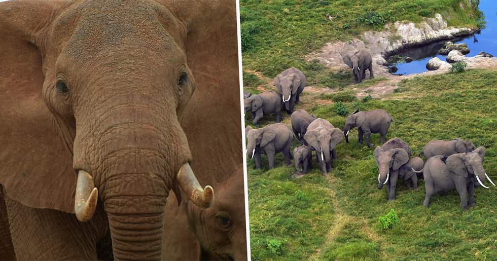 Kenya's Elephant Population Has Doubled in the Last Three Decades