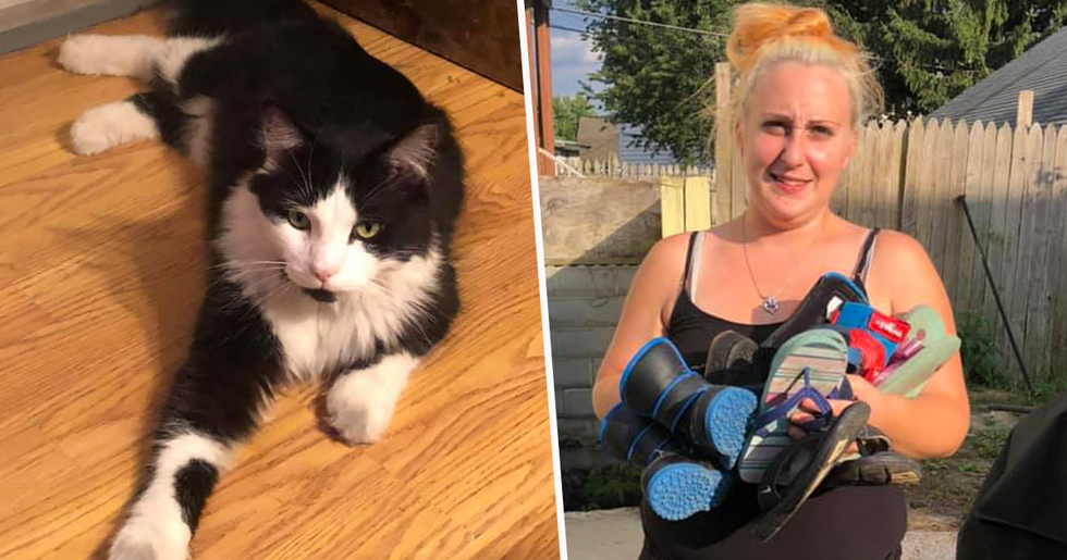 Owner Creates Facebook Group to Return the Shoes Her Cat Steals