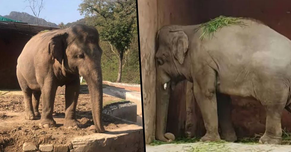 'World's Loneliest Elephant' Kept In Chains for 35 Years Finally Finds New Home