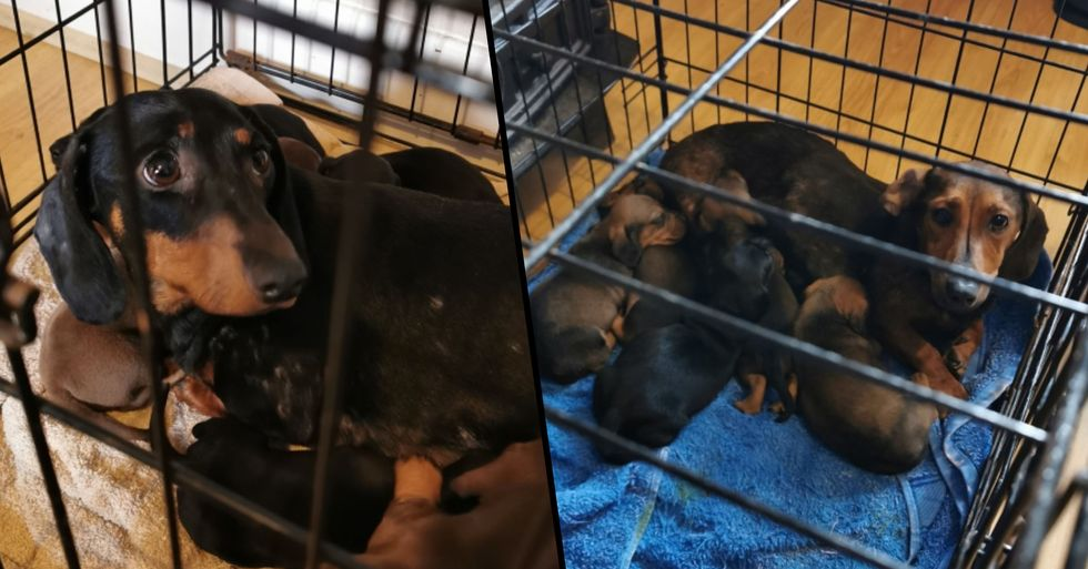 Police Seize More Than 30 Dogs Worth Over $140,000