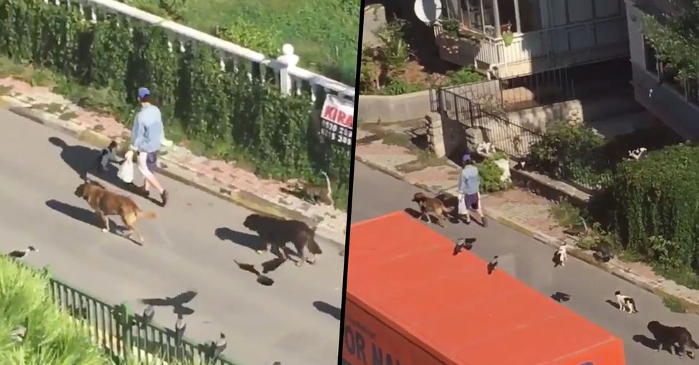 Woman Spotted Leading Parade of Animals Down Street