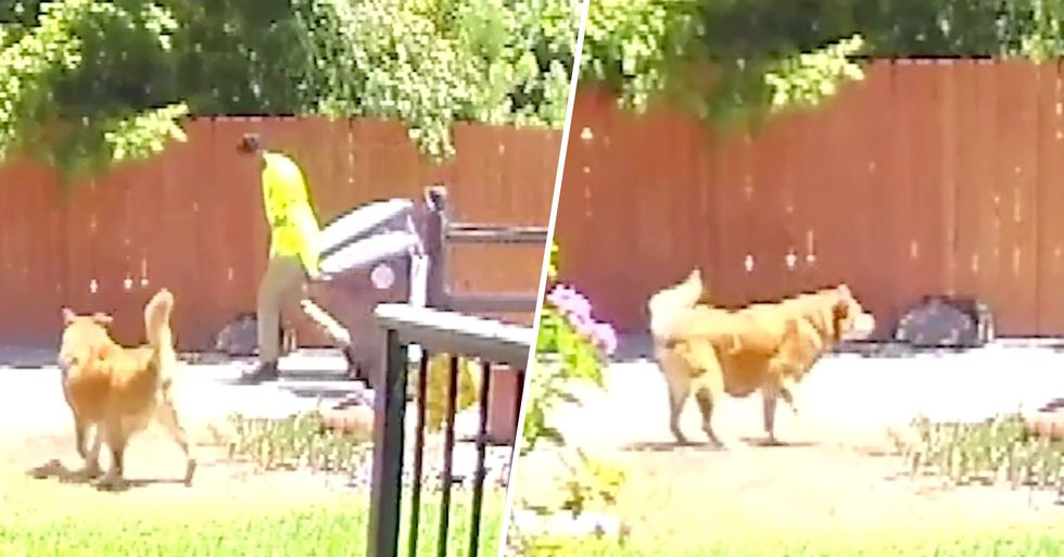 Security Footage Shows Hero Dog Leading Sanitation Worker To Elderly Owner Who'd Fallen