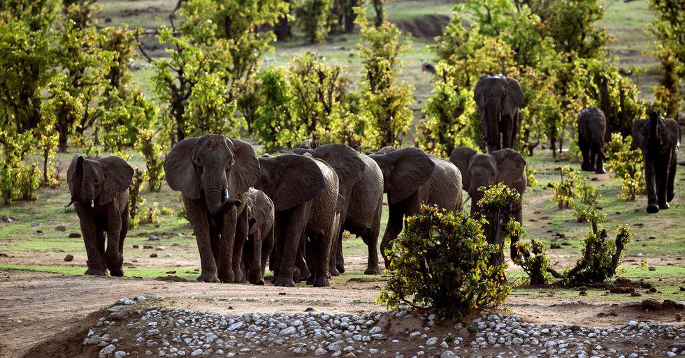 Mystery as 11 Elephants Are Found Dead in Zimbabwe