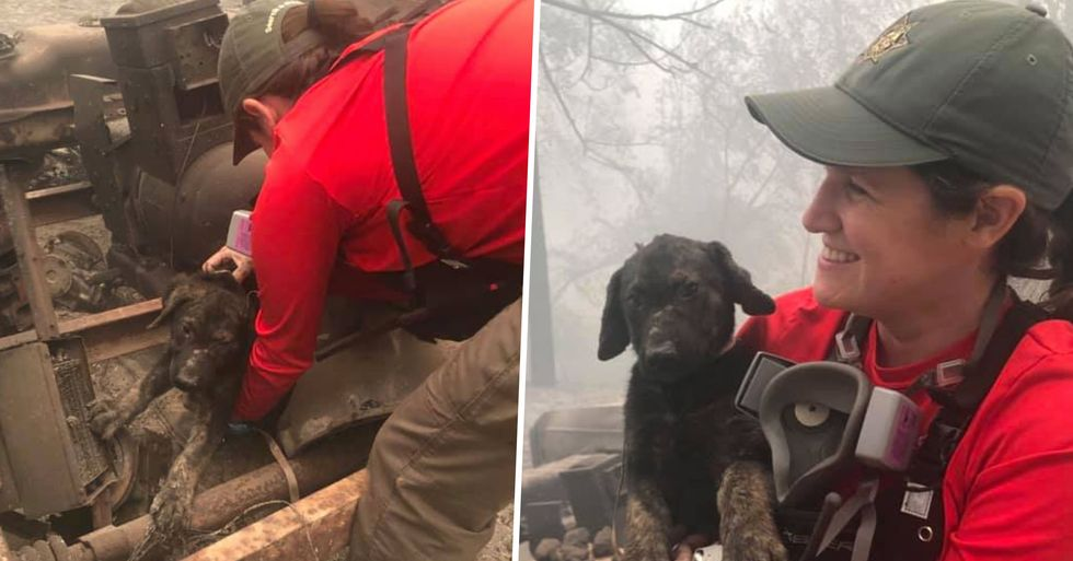 Rescuers Save Puppy Found in Ashes Amid California Wildfires