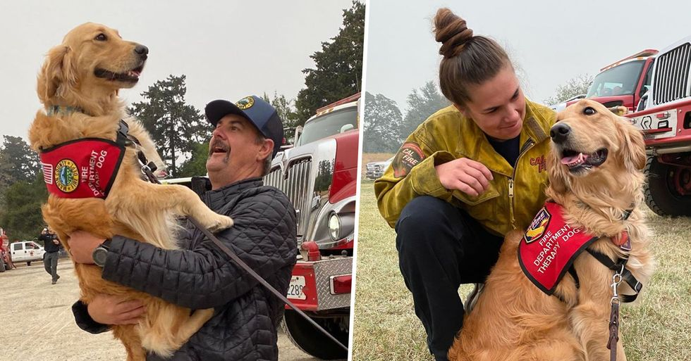 Golden Retriever Comforts California Firefighters Putting Out Raging Wildfires
