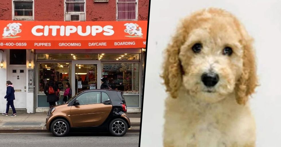 Woman Sues Pet Shop for Not Letting Her Take Pricey Poodle Home
