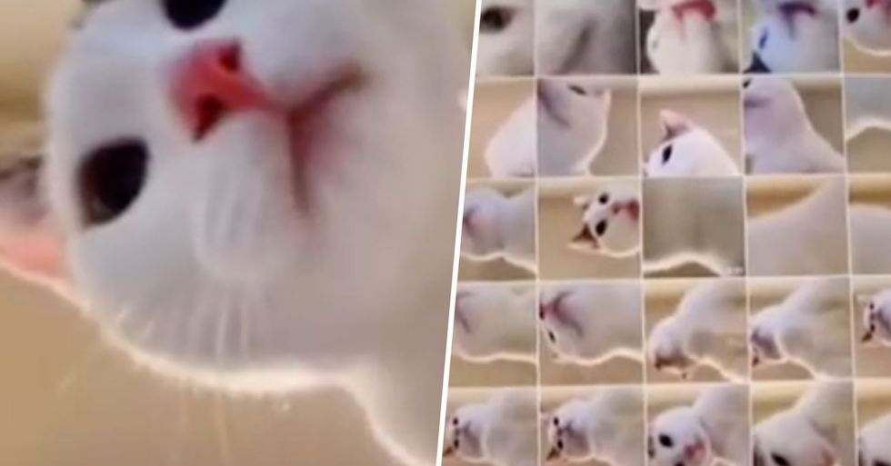 Pet Owner Finds Dozens of 'Cat Selfies' After Home Alone Feline Played With Her Tablet