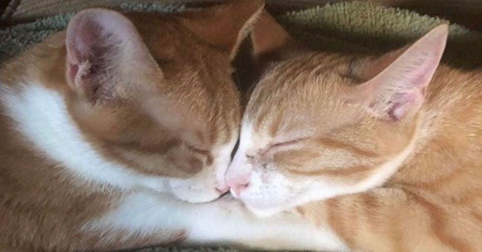 Adorable Cat Siblings' Reaction To Being Adopted Together is Melting Hearts