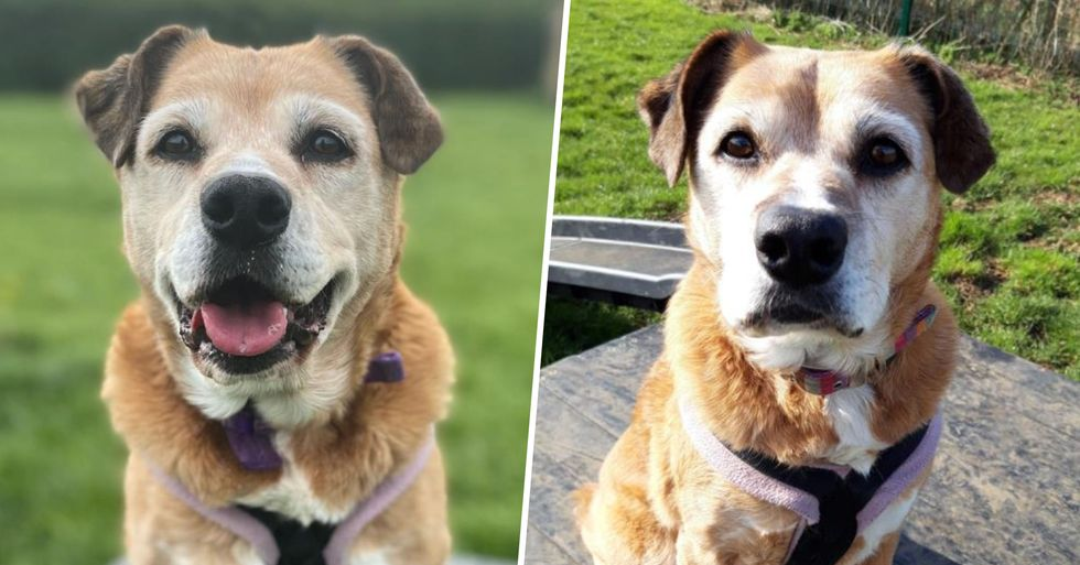 Desperate Plea To Find Owner for 11-Year-Old Dog Who's Never Had a Real Home