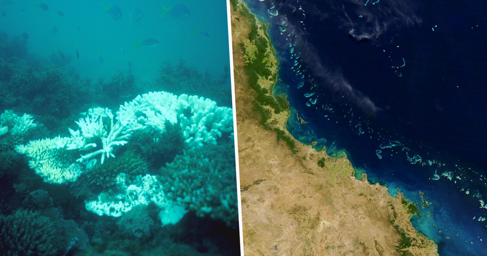The Great Barrier Reef Has Lost Half its Coral in the Last 25 Years