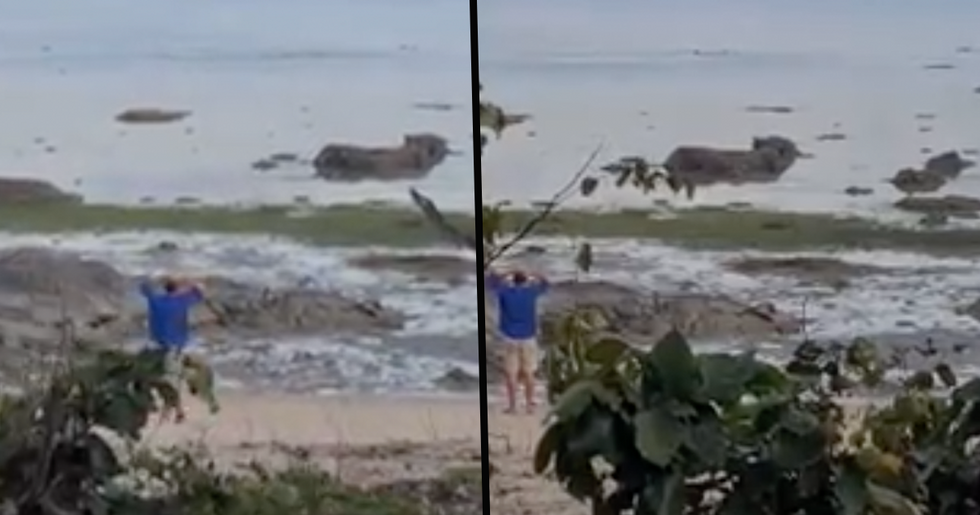 Nail-Biting Moment Pet Dog Narrowly Escapes the Jaws of a Hungry Crocodile