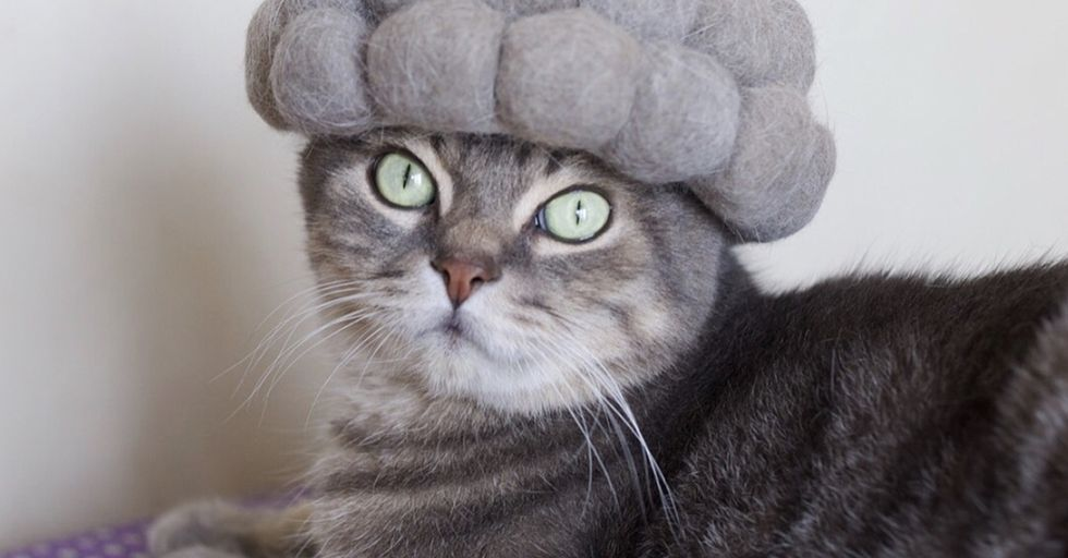 Japanese Artist Makes Hats for Cats out of Their Own Fur