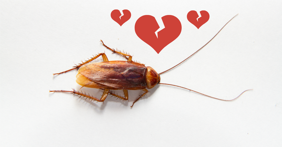 Get The Perfect Revenge This V-Day By Naming A Roach After Your Ex
