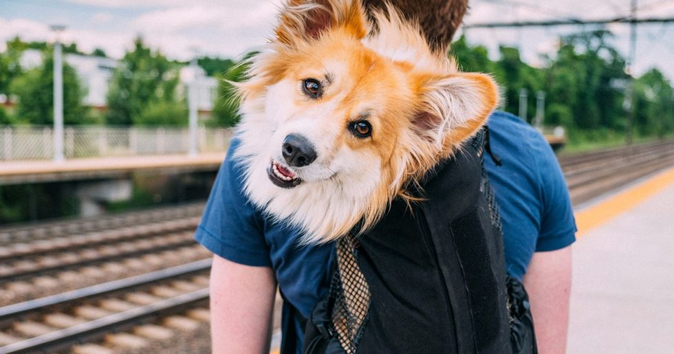 NYC Banned Dogs on the Subway Unless They Fit In Bags, So Owners Got Creative